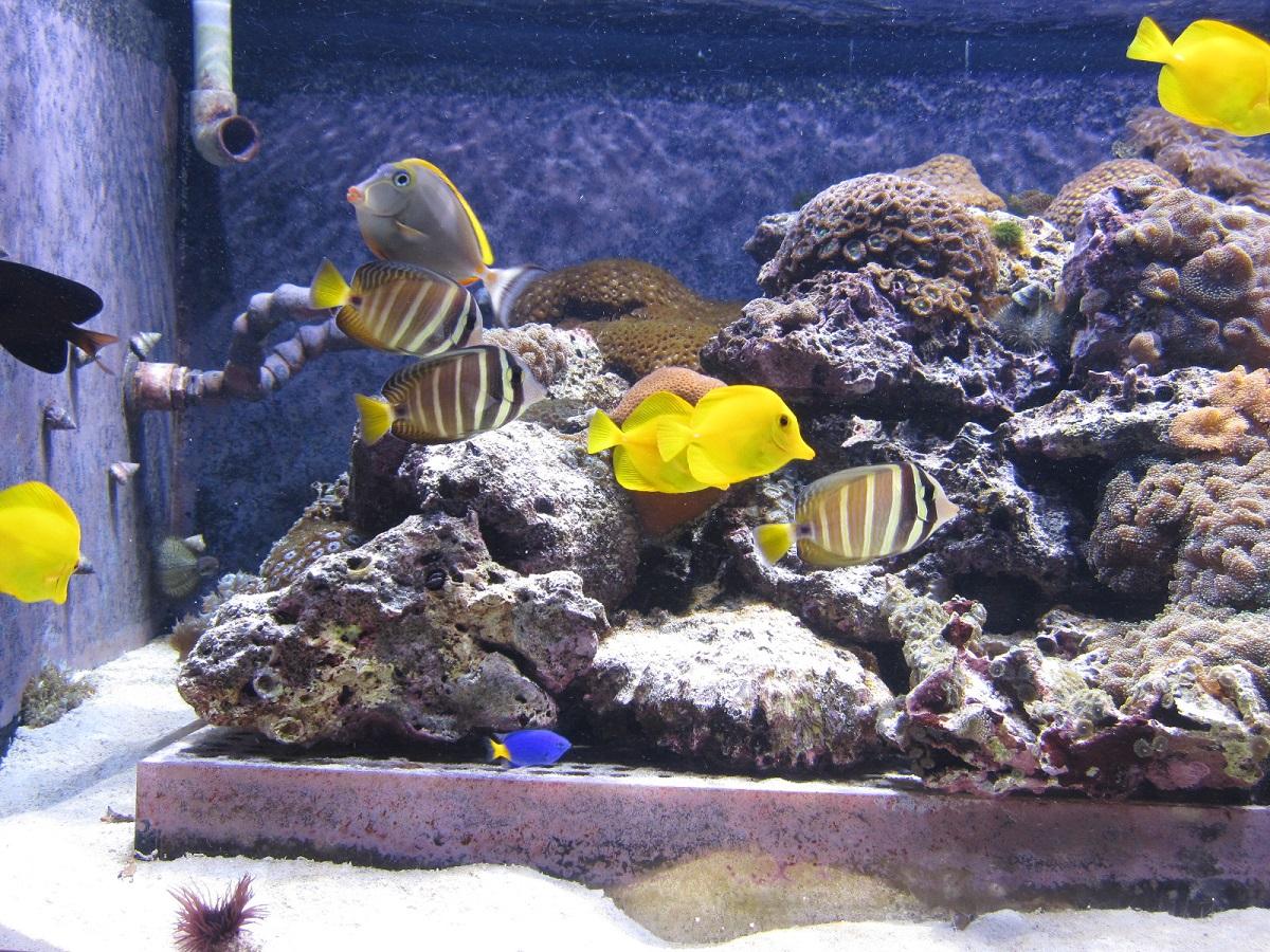 Aquarium Medellin